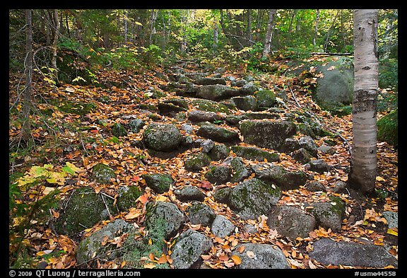 Fall In Maine Wallpaper Picture Photo Trail Ascending In Forest Over Stones