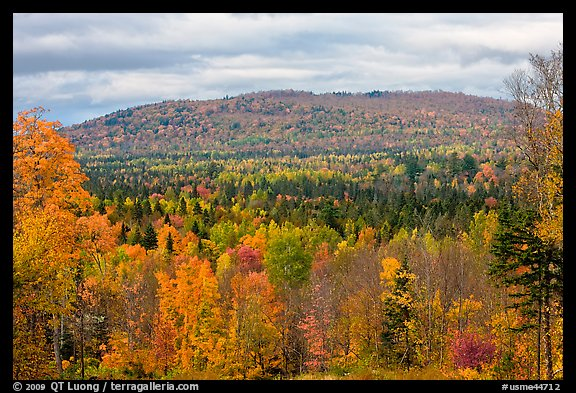 Fall In New England Wallpaper Picture Photo Northern Forest Landscape In Autumn Maine Usa