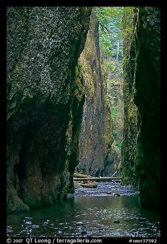 PicturePhoto Oneonta Gorge Columbia River Gorge Oregon USA
