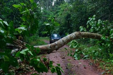 Tree Blocking the Way