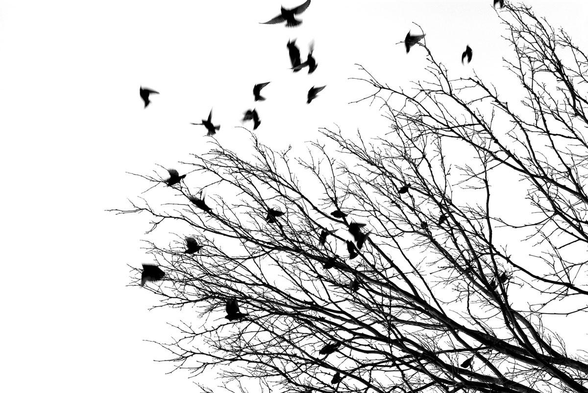 Two Poems by Sally Bliumis-Dunn • Terrain.org