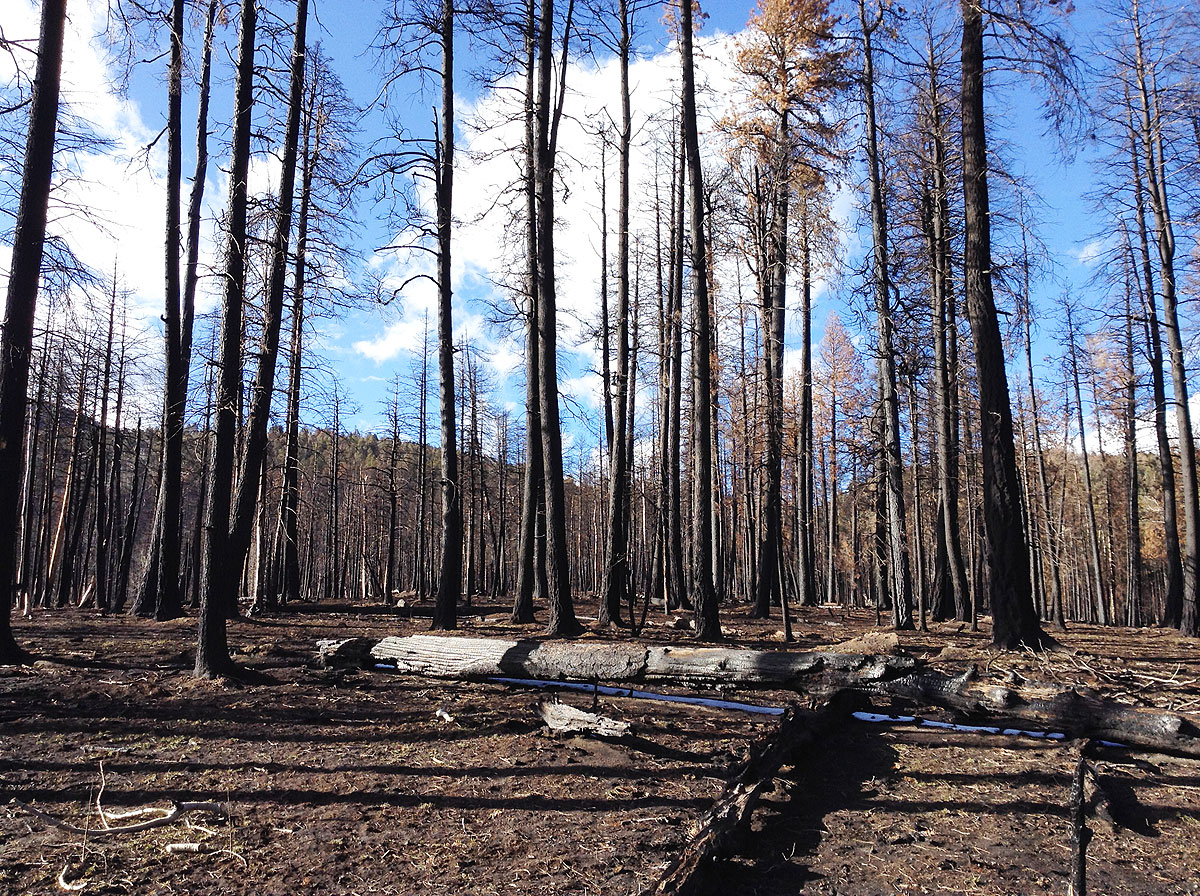 After the fire: the burned landscape of the Valles Caldera