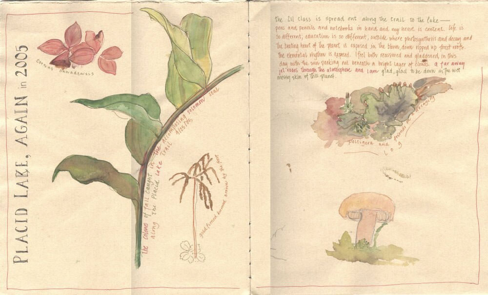 Illustrated journal pages from Placid Lake.