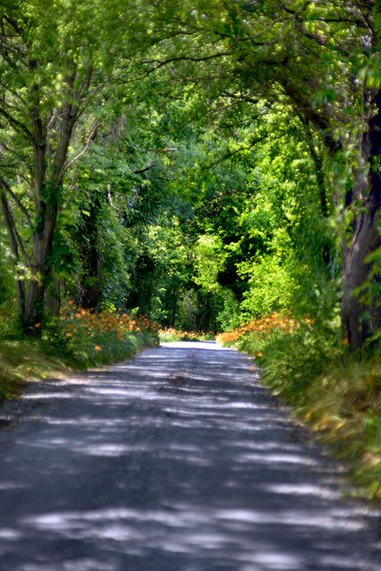 Rustic road in Montgomery County, Maryland
