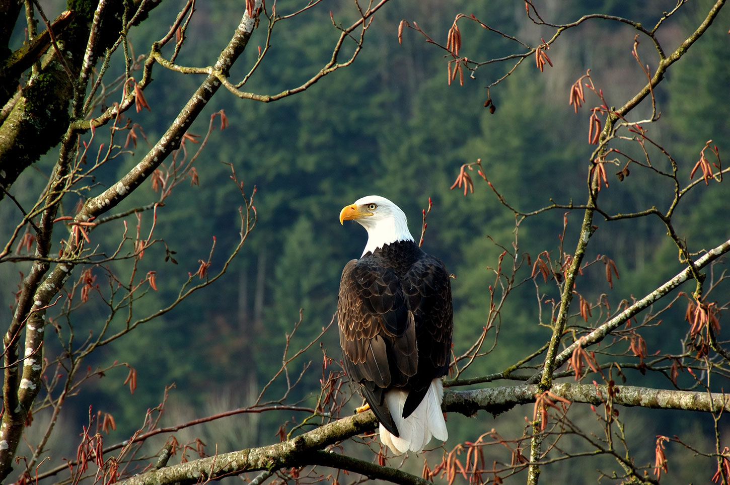 Old Roads, New Stories: Why We Have Eagles, by Rob Carney