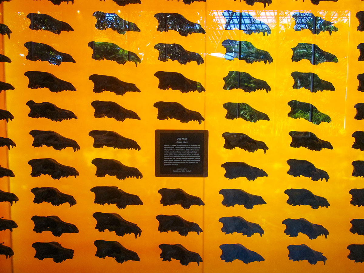 Wall of backlit dire wolf skulls