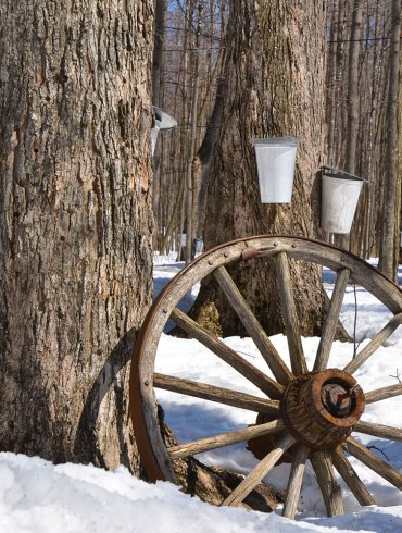 Maple syrup buckets in snowy woods
