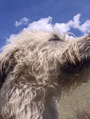 Pam's dog william