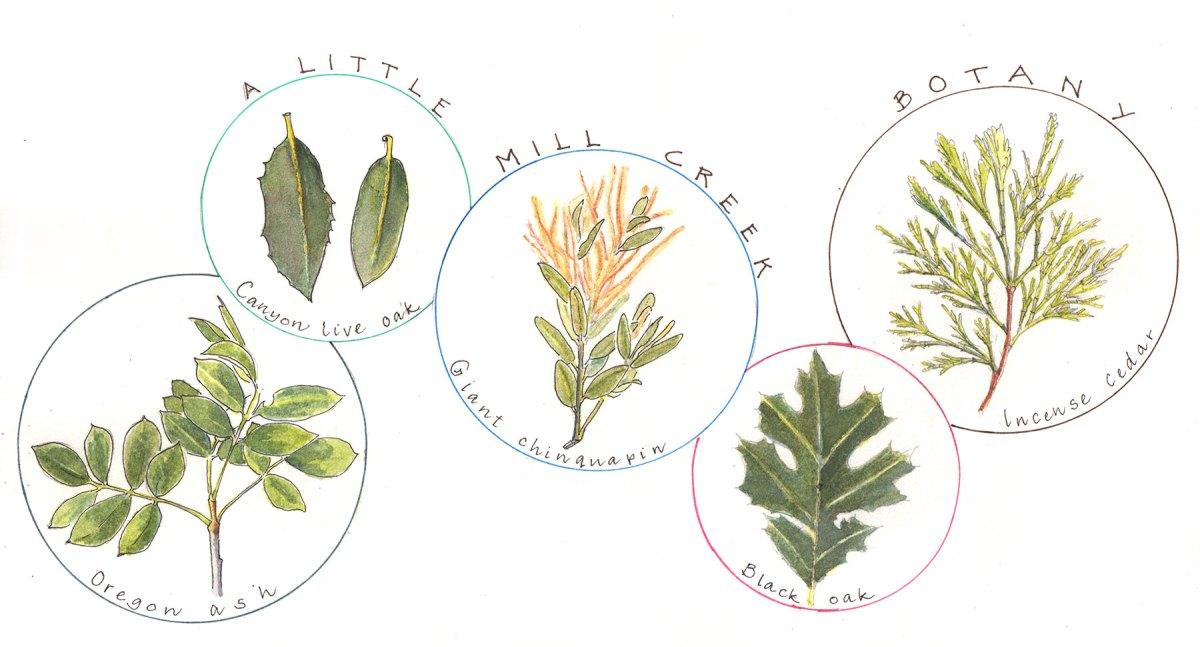 Forest tree leaves, by Lyn Baldwin