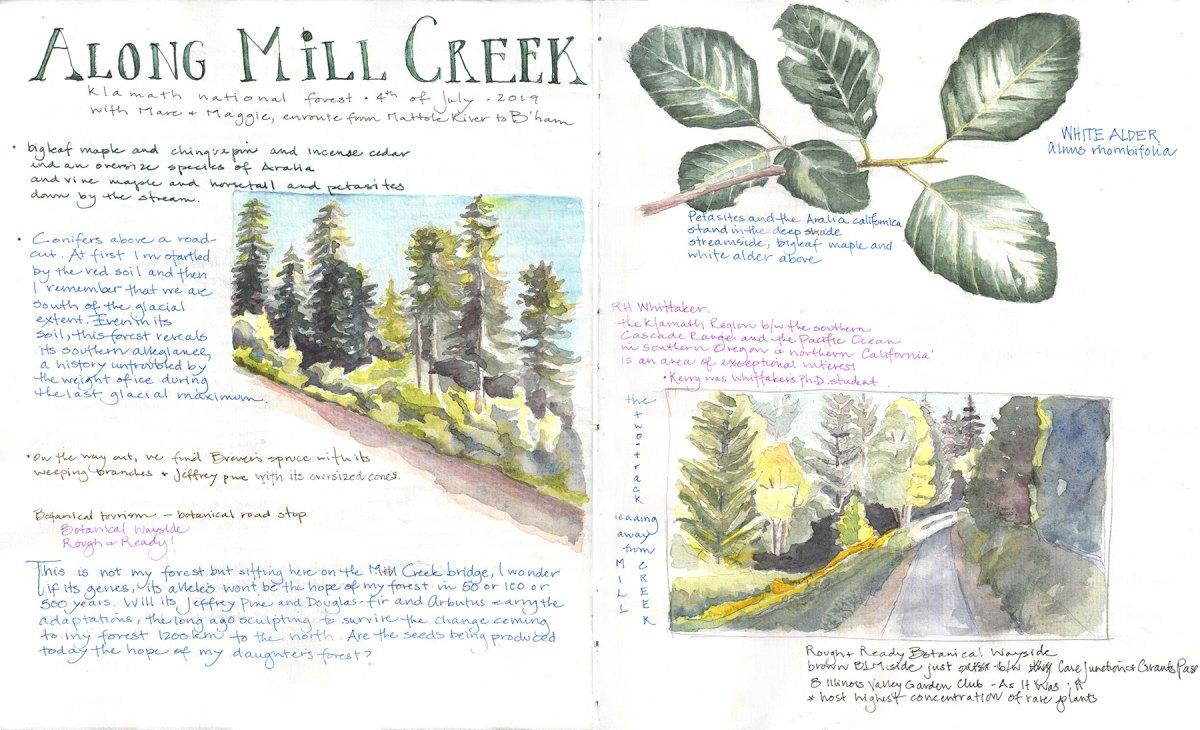 Field journal: Along Mill Creek, by Lyn Baldwin