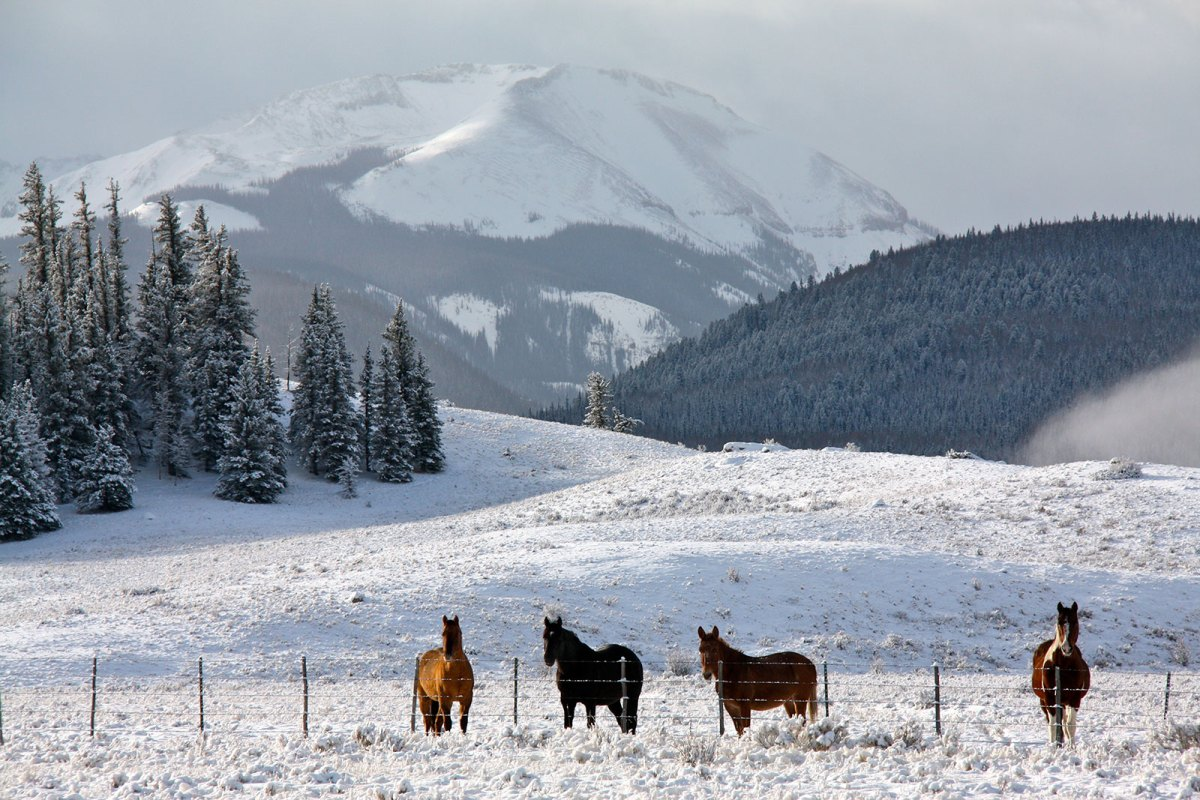 Snowy ranch with horses