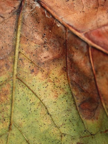 Leaf with brown and green