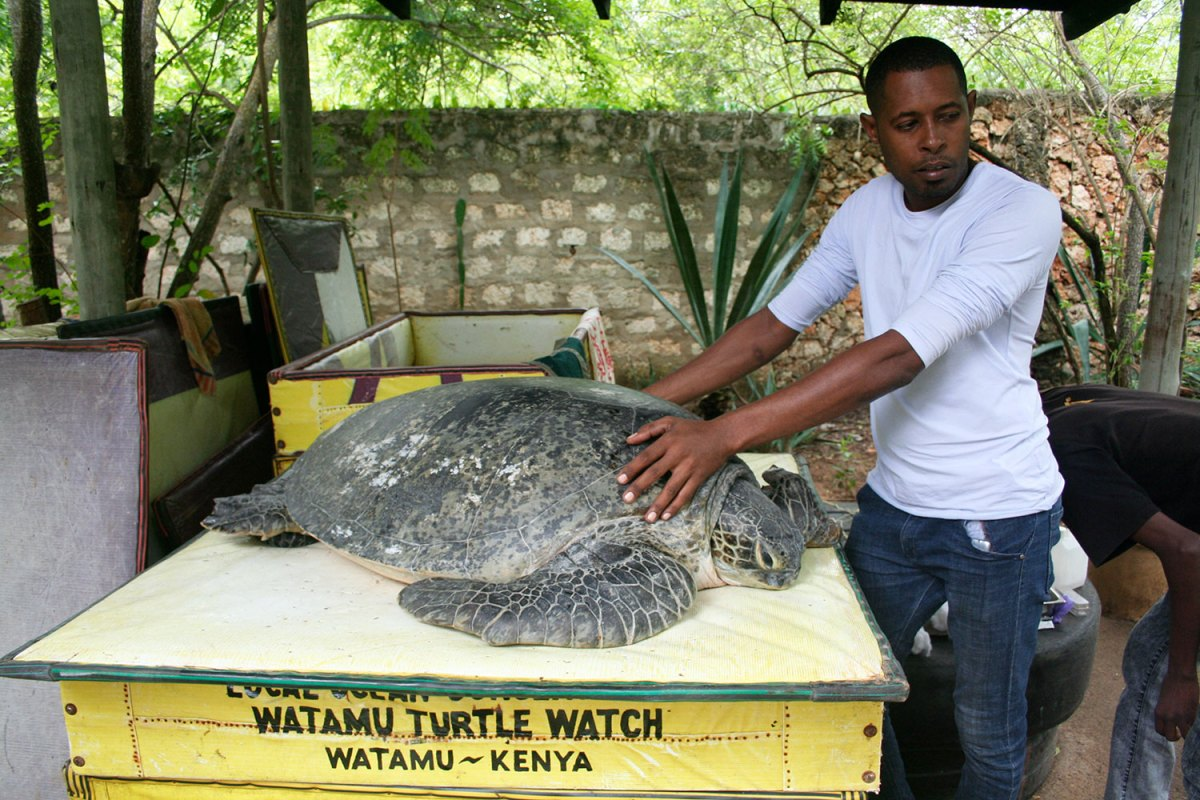 The veterinarian with a sea turtle. Photo by Amy Yee.