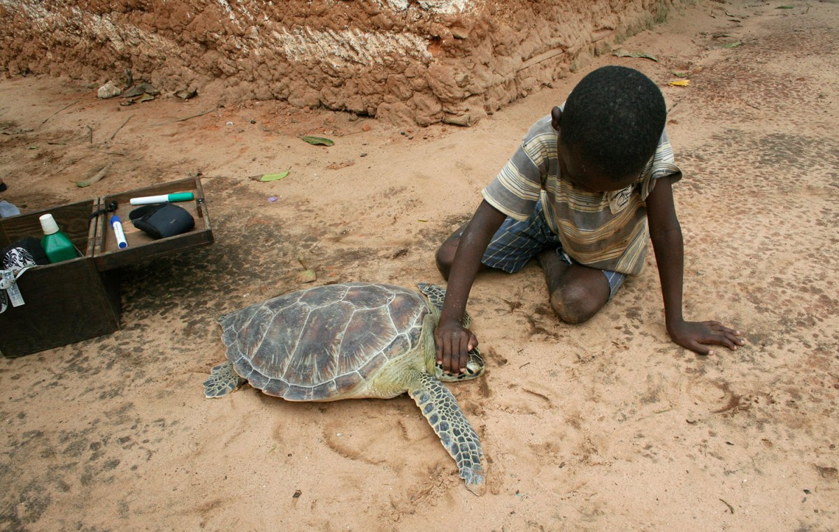Boy touching caught sea turtle.  Photo by Amy Yee.