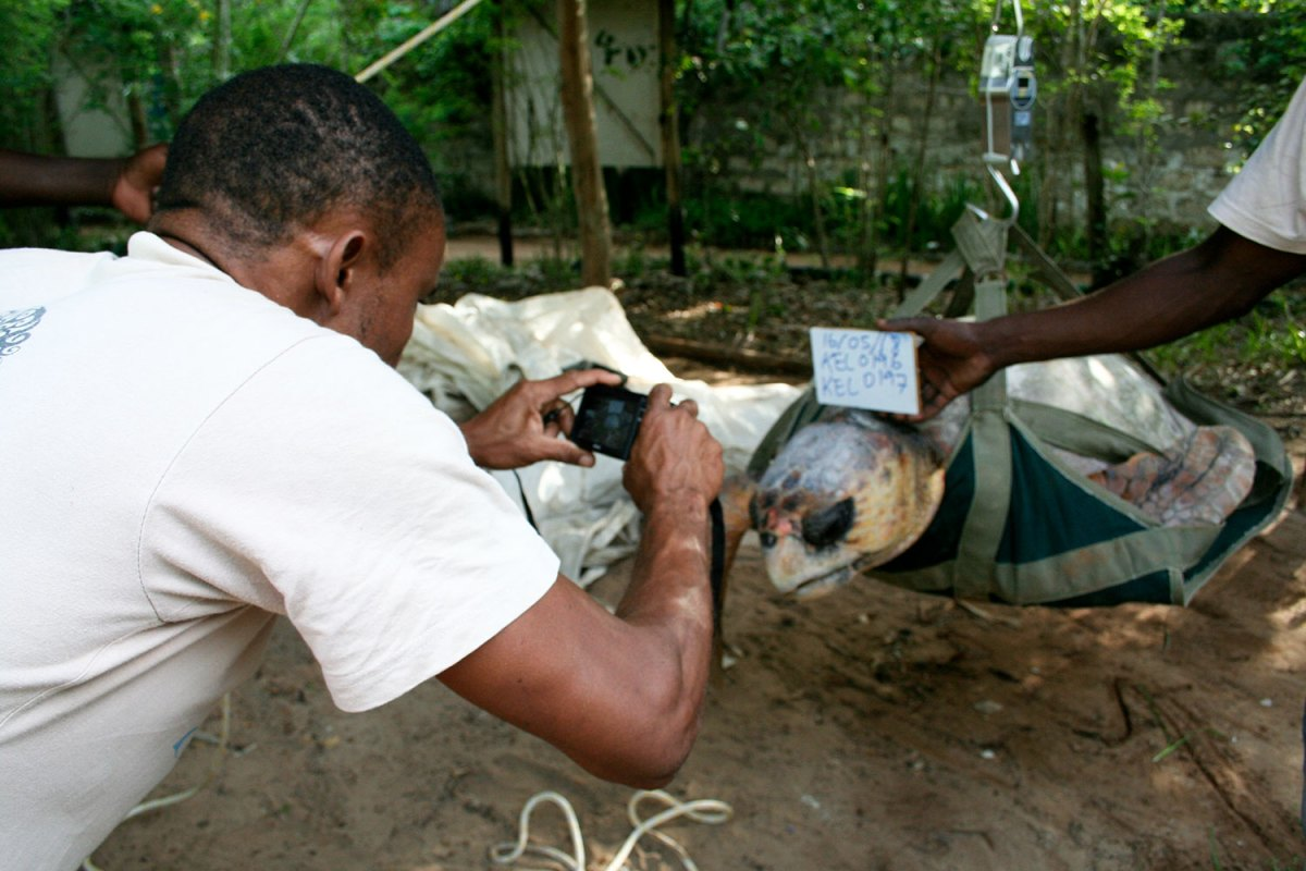 Photographing the loggerhead turtle. Photo by Amy Yee.