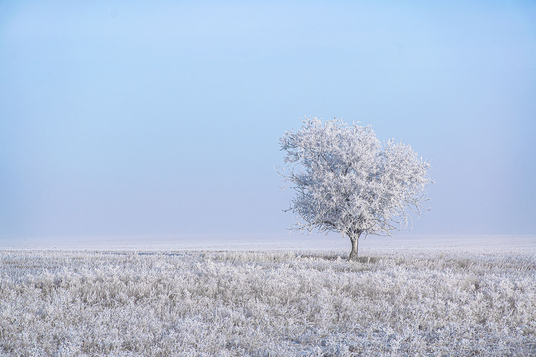 Hoarfrost on prairie and tree. Photo by W. Scott Olsen.