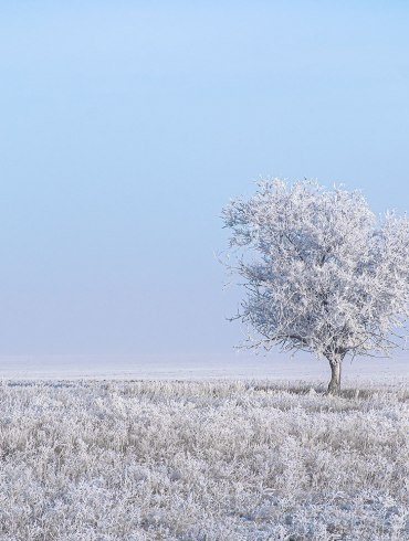 Hoarfrost on prairie and tree. Photo by W. Scott Olsen.