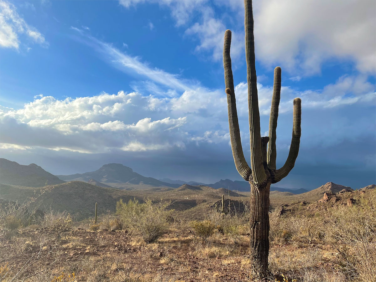 Monsoon building over the Arizona-Mexico border