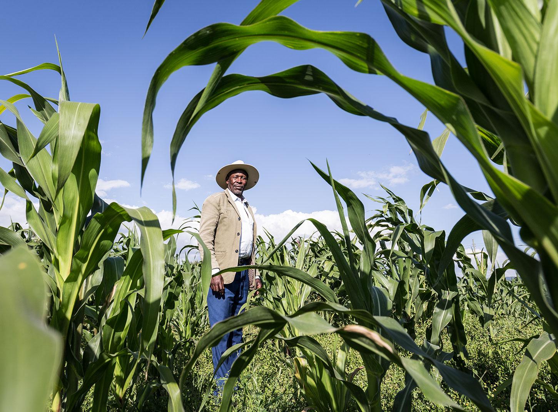 Kenyan farmer in maize field