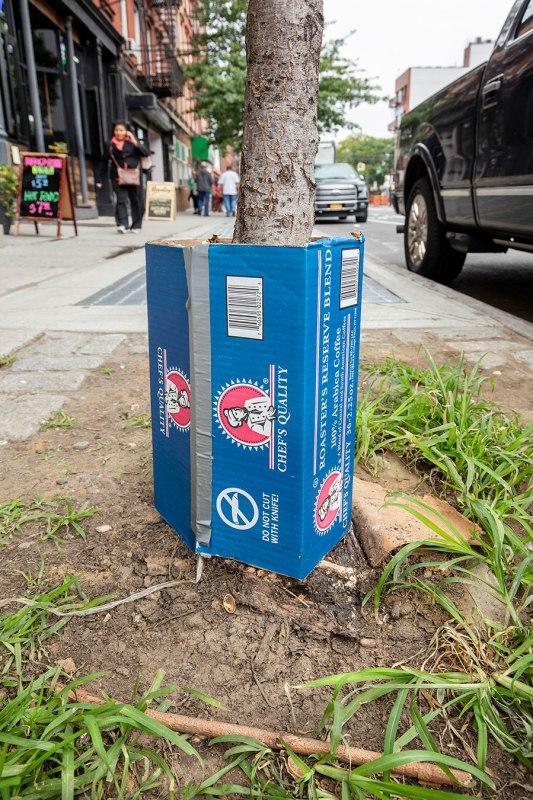 Brooklyn, Box Tree Guard, Greenpoint