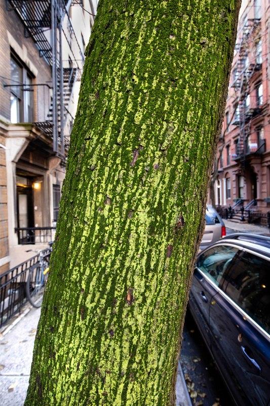 Manhattan, Moss Trunk, West Village, Manhattan