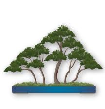 forêt ; Yose-ue