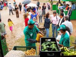 frutta verdura raccolta differenziata