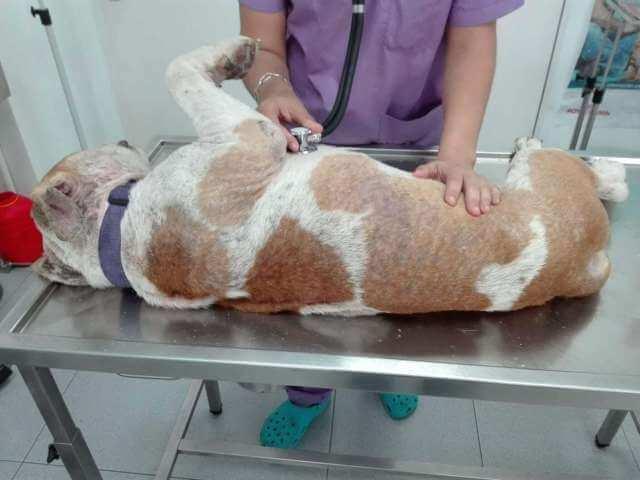 Rocky en el veterinario