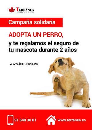 seguro para perros gratis