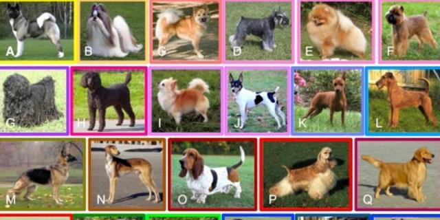 En la investigación se analizaron todas las razas de perros (Foto: Cell Reports).