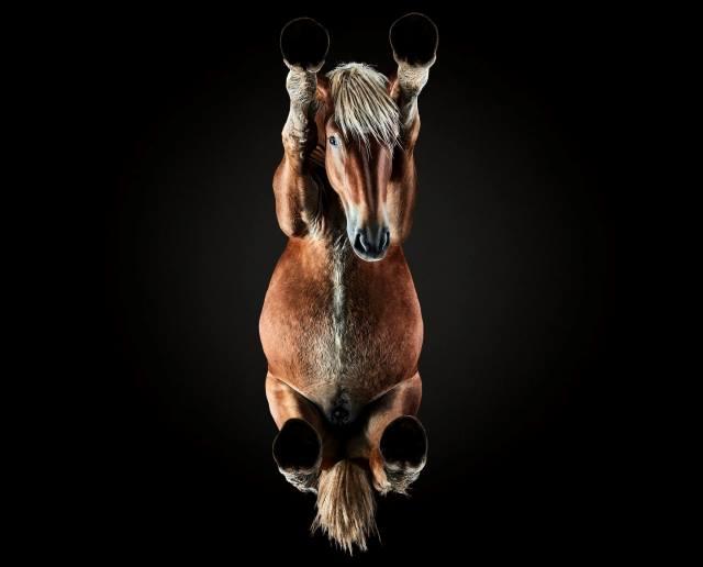 Burba cumplió su reto de fotografiar a un caballo desde abajo (Foto: Underlook).