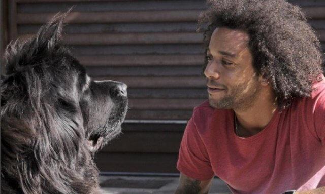 Marcelo con su Terranova llamado Lola.