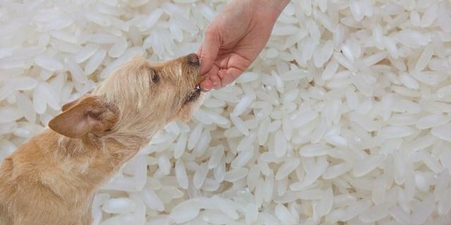 El koji será un alimento para perros en un futuro cercano.