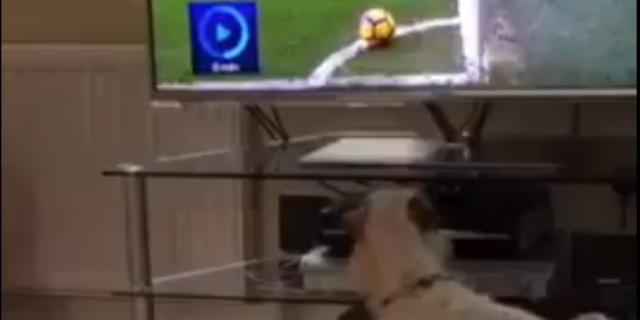 El perro de Ozil mira atentamente al balón (Foto: Twitter).