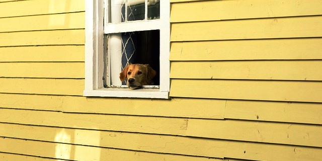 Perro en una ventana.