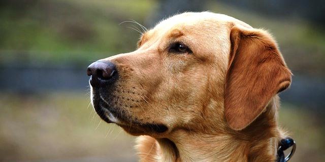 Mirada de un perro.