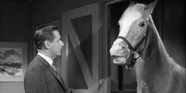 fotograma de Mr Ed el caballo que habla