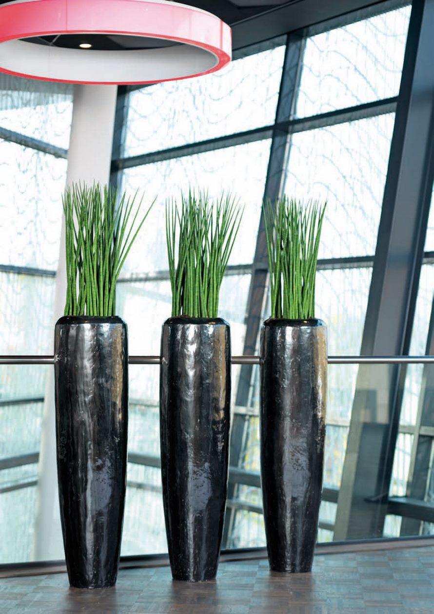 Sansevieria spikes marmorates 60 cm  Terrapalme Heim und Gartenshop