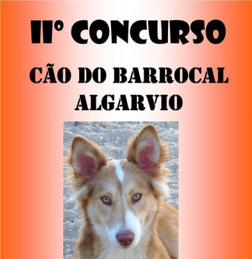 cartaz cão barrocal