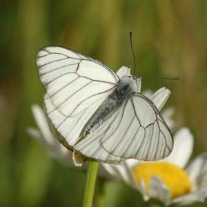 jardinons ensemble papillon blanc