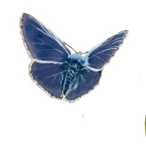 jardinons ensemble papillon bleu