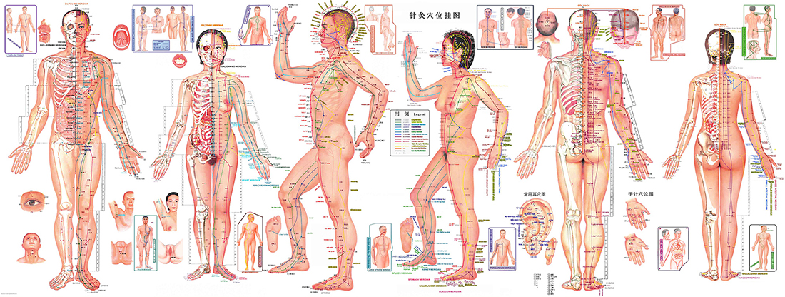 Les méridiens et les points d'acupuncture en Médecine Traditionnelle Chinoise