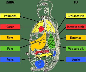 Association Organes-Vicères Zang-Fu