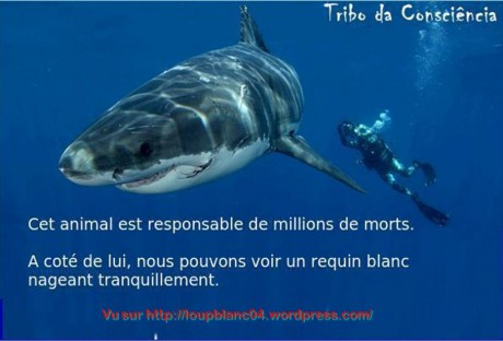Requins: l'Australie Occidentale montre les dents