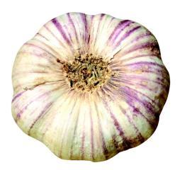 ail violet