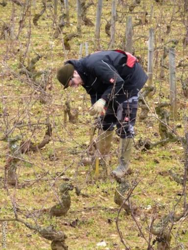 Chateau Chassagne Montrachet Tailleur de vignes TerroirEvasion.com