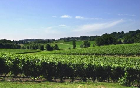 Vignoble - Francs Côtes de Bordeaux - Terroir Evasion