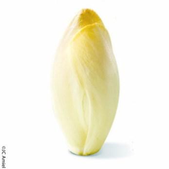 Endive blanche chicorée