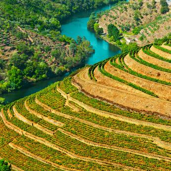 Vignoble vallée Douro @GeorgeKuna