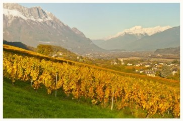 Vignoble Ph Grisard Cruet Savoie